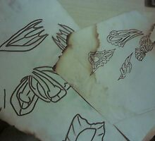 Originl World Butterfly wing sketches LW by Mthrntre