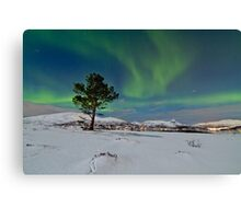 Aurora over the pine tree Canvas Print