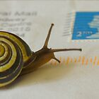 Snail mail by Sue Purveur
