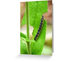 Hungry Caterpillar Greeting Card