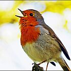 """ Robin Redbreast"" by Malcolm Chant"