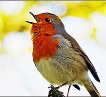 """ Robin Redbreast"" by Malcolm Chant"