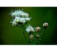 White flower Photographic Print