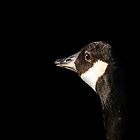 Canada Goose in Shadow, Ottawa Ontario by Debbie Pinard