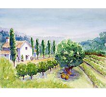 French vineyard Photographic Print