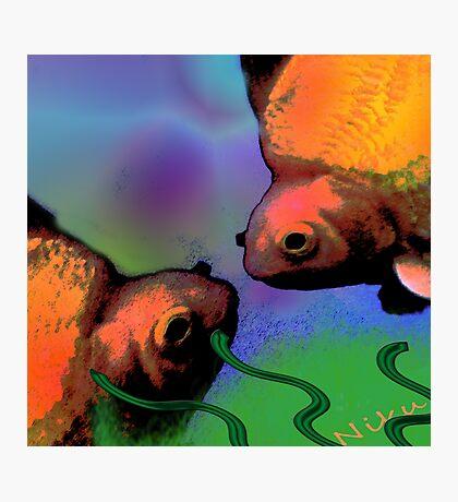 Nature. Fish Photographic Print