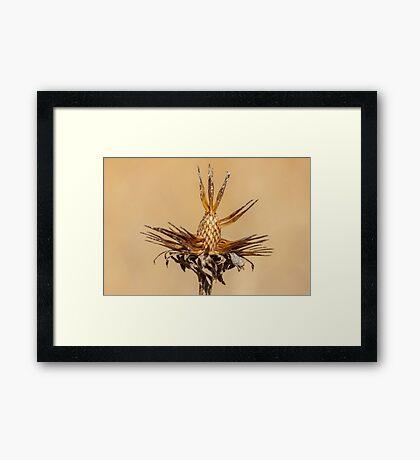 Fall Plant Framed Print