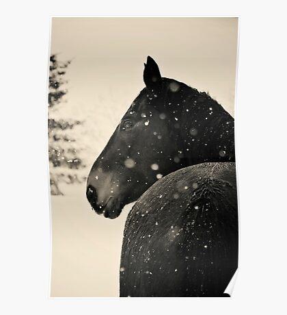 Black Horse VS. Snow Storm Poster
