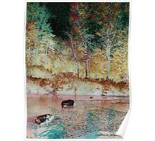 Salmon Creek.... Poster
