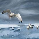 Thin Ice by John Poon