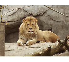 Lion - paws up Photographic Print