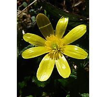 Buttercup Delight Photographic Print
