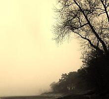 Foggy Beach! by ThePigmi