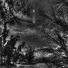 DarkScape_C6306 by sasakistudio