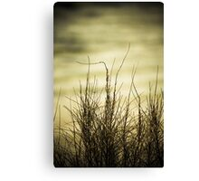 Sea grass with textured background. Canvas Print