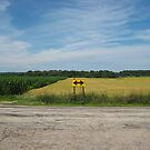 Wheat Field Road Sign by evergleammm