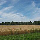 Sunny Wheat by evergleammm
