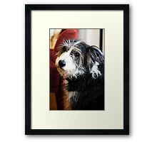 Maggie the Dog Framed Print