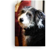 Maggie the Dog Canvas Print