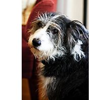 Maggie the Dog Photographic Print