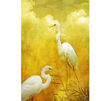 Dance of the Herons Photographic Print