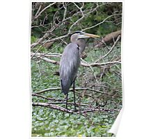 Great Blue Over Green Poster