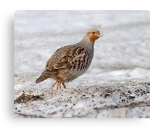 "Member of the ""Group of Seven"" - Gray Partridge :) Canvas Print"