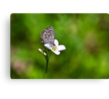Spring Butterfly Art Canvas Print