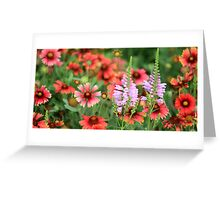 Colourful combination Greeting Card