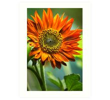 Orange Sunflower Art Art Print