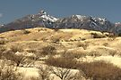 Desert Grasslands  by Kimberly Chadwick