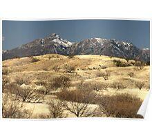 Desert Grasslands  Poster