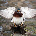 Duck Angel by Eivor Kuchta