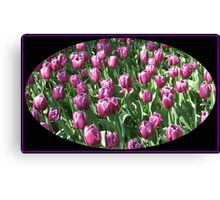Sunlit Magenta Tulips Vignette Canvas Print