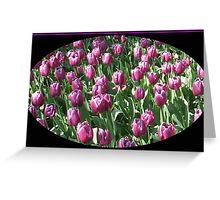 Sunlit Magenta Tulips Vignette Greeting Card