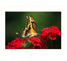 Giant Swallowtail Butterfly Art Art Print