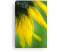 Sunflower Abstract Canvas Print