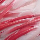 Flamingo Feathers by Caren
