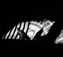Walking into the light– San Francisco City Hall by Uri Z. Fogel