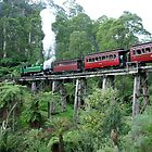 Puffing Billy by Ross Campbell