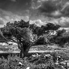 Tree in the wind by Stavros