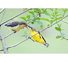 Grubs Up - sunbird feeding babes  Photographic Print