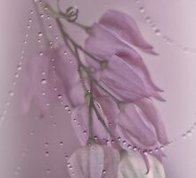 Purple Rain by Dianne English