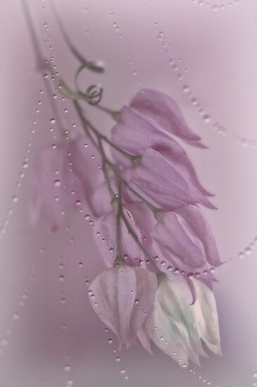Purple Rain by Dianne English
