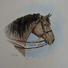 Australian War Horse by opheliasfiction