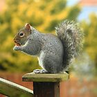 The Grey Squirrel by stuart powell
