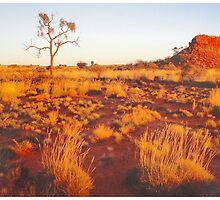 Spinifex, Sand, Sunset, Desert Oak and Stock Route. by George Petrovsky