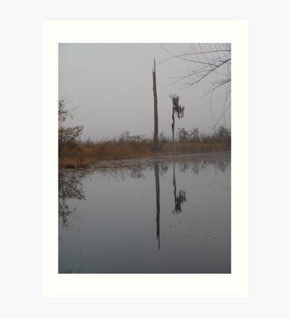 fog,Econfina Creek,wasp tree,cypress,swamp Art Print
