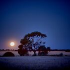 MoonRise by Pene Stevens