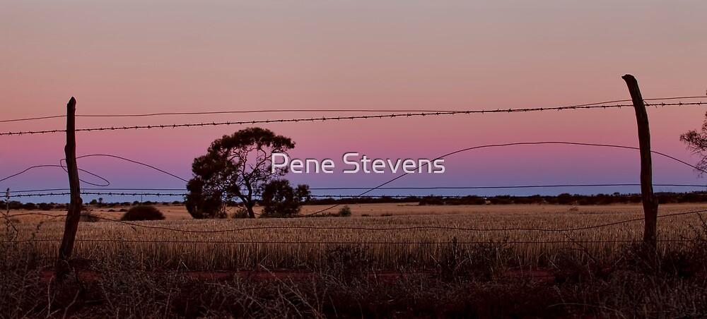 Waiting for the Moon  by Pene Stevens